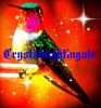 crystalnightingale - Birdrama bird breeder