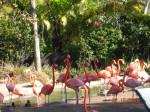 Flamingo - (2 years)