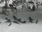 Birds - (1 year)