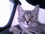 mon petit dodiche - Cat