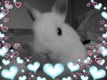 yoyo - Male Dwarf rabbit (2 years)