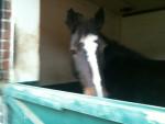 maïka - Horse