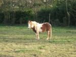 ottawa - Pony